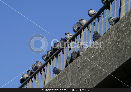 Urban Birds stock photo, Birds lined up on the top of the building by Tyler Olson