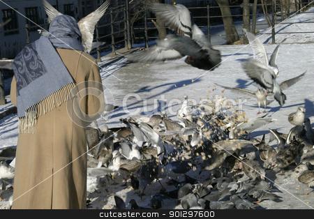 Feeding Hungry Birds stock photo, Feeding hungry birds in the city by Tyler Olson