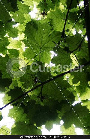 Green Leaf Texture stock photo, Bright green tree leaf texture by Tyler Olson