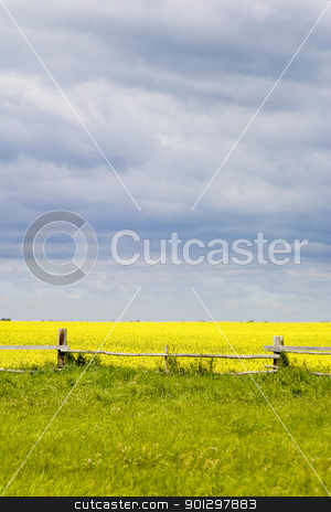 Prairie Landscape - Fence Line stock photo, Prairie landscape with old fence line. by Tyler Olson