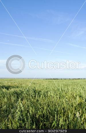 Oats Landscape stock photo, Prairie landscape of an oat field. by Tyler Olson