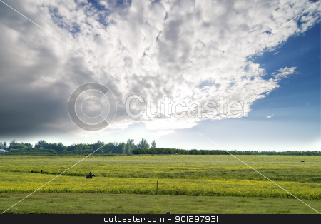 Prairie Summer Landscape stock photo, Prairie landscape with a green field by Tyler Olson