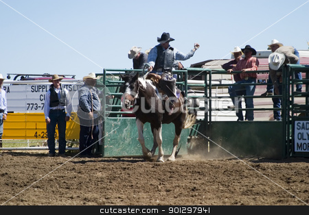 Saddle Bronc stock photo, Saddle Bronc riding at the Herbert Rodeo by Tyler Olson