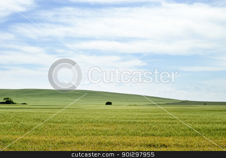 Prairie Landscape stock photo, Prairie horizon in rural Saskatchewan. by Tyler Olson