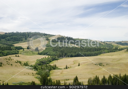 Cypress Hills stock photo, Cypress Hills provincial park, Saskatchewan, Canada by Tyler Olson