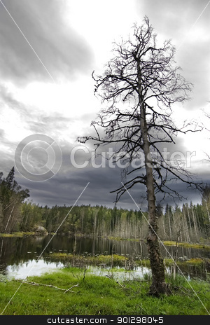 Dead and Lonely stock photo, A loan dead tree in a marsh by Tyler Olson