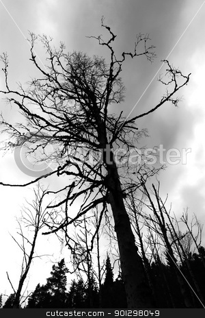 Dead Tree stock photo, A tall dead tree standing in a marsh by Tyler Olson
