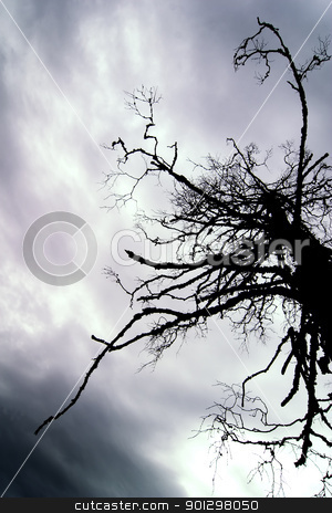 Dead Tree stock photo, A tall dead tree standing in a marsh by Tyler Olson
