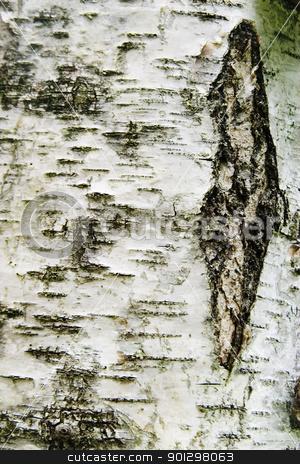 Poplar Texture stock photo, Poplar tree texture by Tyler Olson
