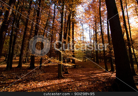 Dark Autumn Forest stock photo, A Romantic autumn forest with golden and red leaves by Tyler Olson