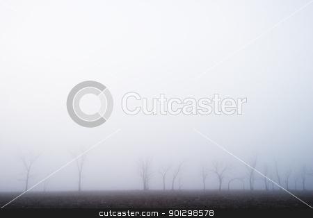 Prairie Fog stock photo, Fog on the prairie by Tyler Olson