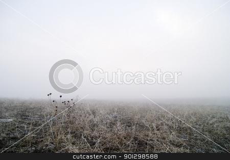 Prairie Fog stock photo, Prairie fog landscape in the winter. by Tyler Olson