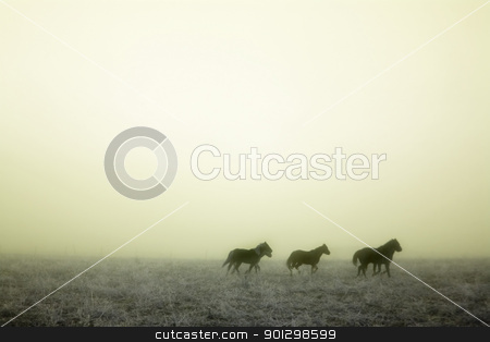 Gallping in the Mist stock photo, Horses galloping in the mist. by Tyler Olson