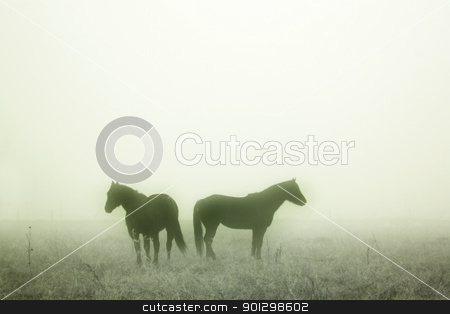 Prairie Horses stock photo, Horses in the mist by Tyler Olson