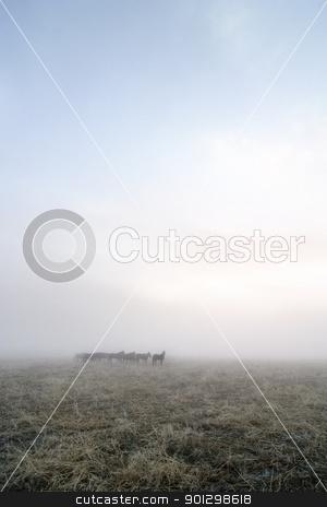 Prairie Horses stock photo, Horses in the fog on the prairie. by Tyler Olson