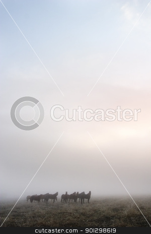 Prairie Horses stock photo, Horses in the fog on the prairie. by Tyler Olson