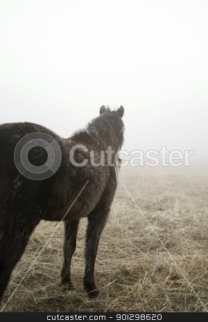 Prairie Horse stock photo, Horse looking out on the prairie. by Tyler Olson