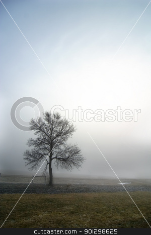 Alone stock photo, A single tree in the fog. by Tyler Olson