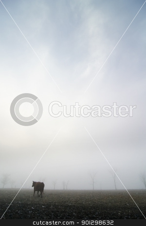Cow in the Fog stock photo, Cow on the prairie on a foggy winter day by Tyler Olson