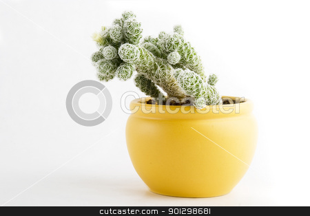 Cactus with Flower stock photo, A small cactus with a small flower beginning to bloom by Tyler Olson
