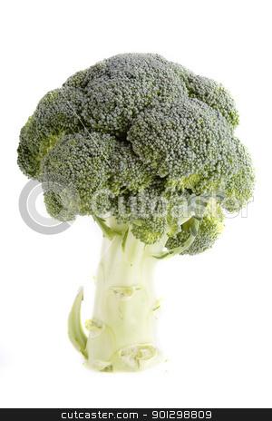 Broccoli stock photo, A stalk of broccoli by Tyler Olson
