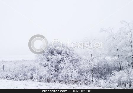 Prairie Fog stock photo, Group of trees on a prairie landscape engulfed in fog. by Tyler Olson