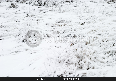 Snow Grass stock photo, Snow covered grass texture by Tyler Olson