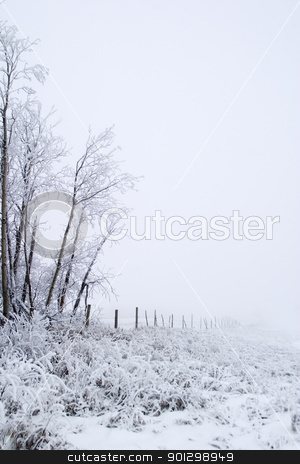 Prairie Fog stock photo, Group of trees on a prairie landscape engulfed in fog. by Tyler Olson