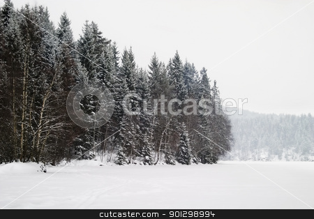 Frozen Lake with Trees stock photo, A grouping of trees on a frozen lake during winter, Oslo, Norway by Tyler Olson