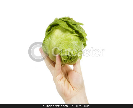Head of Lettuce stock photo, A head of lettuce perched on a hand isolated on white. by Tyler Olson