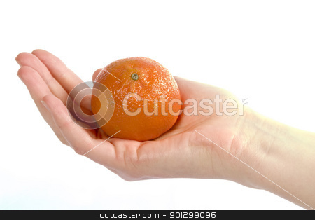 Orange in Hand stock photo, A womans hand holding a small christmas orange in an open palm.  Isolated on white with clipping path. by Tyler Olson