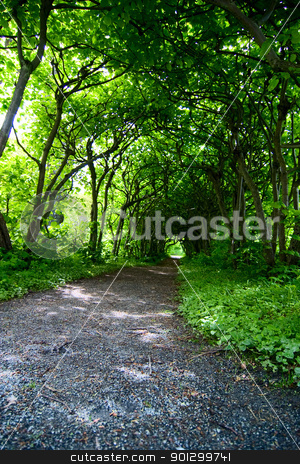 Mystic Path stock photo, A mystical path through trees in a garden by Tyler Olson