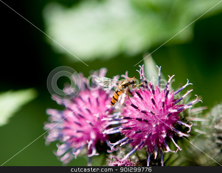 Wasp Macro stock photo, A macro image of a wasp on a purple flower by Tyler Olson