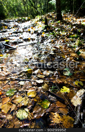 Wet Leaves Reflection stock photo, Wet leaves in the fall reflecting the sunlight shining through the forest - lens flare coming off the leaves by Tyler Olson