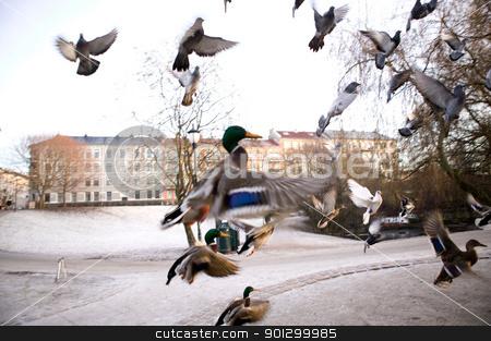 Birds in Flight Sihlouette stock photo, Mallard ducks in flight over the city, captured with motion blur. by Tyler Olson