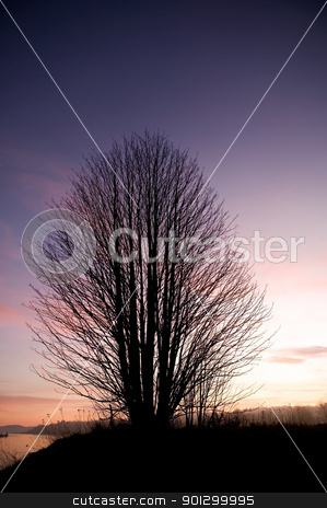 Single Tree stock photo, A single tree on a hill near the ocean at sunset. by Tyler Olson
