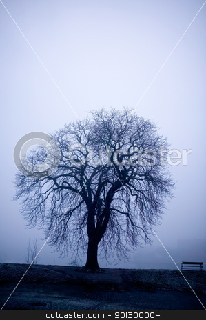 Tree in Fog stock photo, A lone tree on a path in the thick fog of winter.  The image is given a blue cast. by Tyler Olson