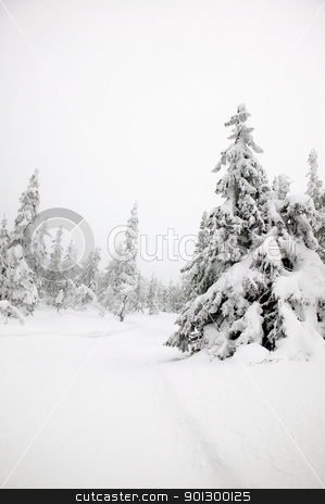 Winter Landscape stock photo, White winter texture and mood image.  A winter setting with lots of snow. by Tyler Olson