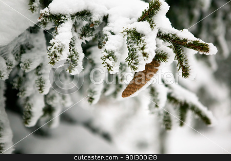 Pine Cone Detail stock photo, White winter texture and mood image.  A winter setting with lots of snow. by Tyler Olson