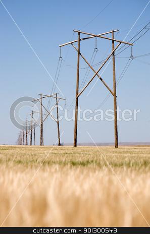 Prairie Power Line stock photo, A high capacity prairie power line stretches off into the distance. by Tyler Olson
