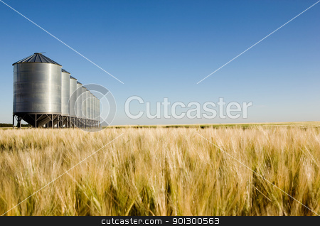 Prairie Harvest Landscape stock photo, Grain bins in the distance with a wheat field in the foreground.  Shallow depth of field is used to bring attention to the grain bins. by Tyler Olson