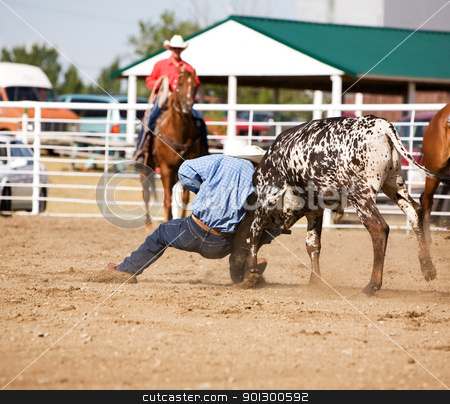 Steer Wrestling stock photo, Steer wrestling at a local small town rodeo by Tyler Olson