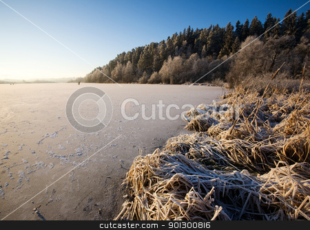 Lake Landscape in Winter stock photo, The edge of a lake with frost and weed texture by Tyler Olson