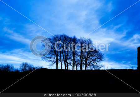 Group of Trees stock photo, A serene group of trees over a blue sky by Tyler Olson
