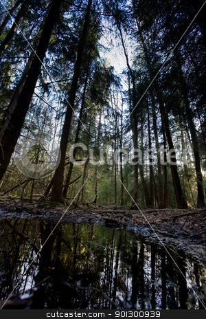 Swamp stock photo, A swamp nature image with a water reflection and forest by Tyler Olson