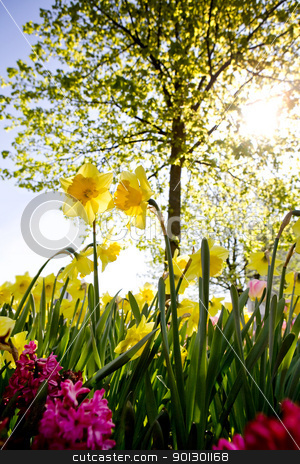 Flower Garden stock photo, A Garden with daffodils and a tree by Tyler Olson