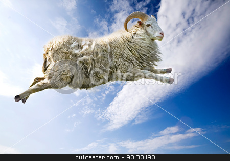 Flying Sheep stock photo, A flying sheep through a beautiful blue sky by Tyler Olson