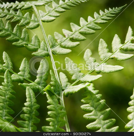 Fern Background stock photo, An abstract background image of a fern by Tyler Olson