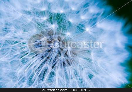Dandelion Seed Background stock photo, Dandelion seed background macro texture by Tyler Olson