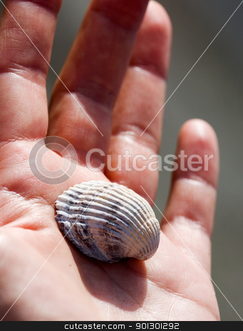 Shell in Hand stock photo, A sea shell in a hand - collection by Tyler Olson